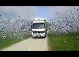 Tūkstančiai paukščių paleidžiami iš narvo