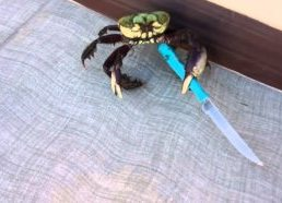 Funny crab killer with knife