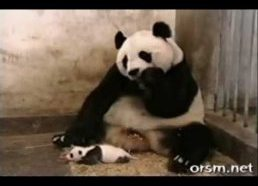 Funny animals video huge collection