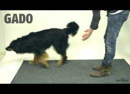 Magijos triukas šunims - juokingos šunų reakcijos