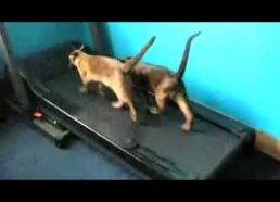 Superkatės - bene juokingiausias video apie kates!