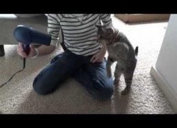 Katinas prieš feną