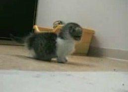 Mielas kačiukas