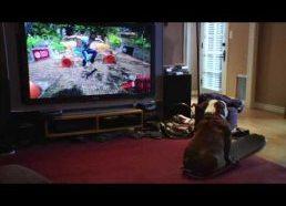 Šuo riedlentininkas treniruojasi ant kompiuterinio žaidimo