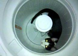 Katės varoma skalbimo mašina arba kaip katė vijosi savo uodegą