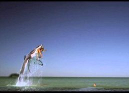 Movie 43 - Tampax Shark Commercial