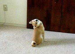Šuo atrado naują būdą kaip žiūrėti atgal
