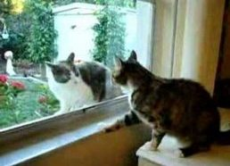Angry cat screams at an other cat through a window