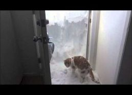 Cat only kind of loves the snow