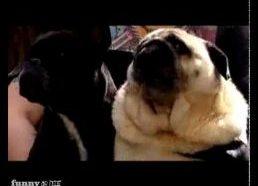 "Šuo kuris lodamas ištaria ""batman"""