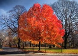 Time Lapse - New York Central park at Fall