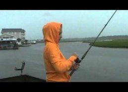 Žuvis kuri pabėgo dėl ryklio kaltės