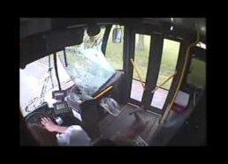 Stirna atsitrenkė į autobusą ir įkrito į vidų