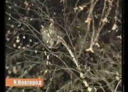 Rusijos kareivėlis savo metodais bando išgelbėti katę