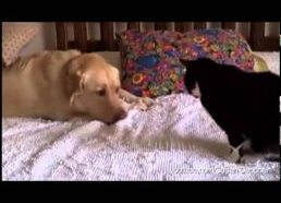 Dogs Annoying Cats with Their Friendship