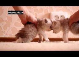 Kačiukų - crash test