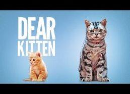 Mielas katinėli