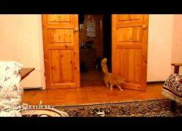 Katinas labai bijo Mario šuolio