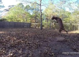 Dogs Who Are Hilariously Awful at Catching and Fetching