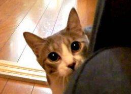 Tykantis Katinas