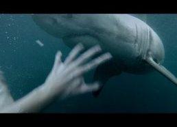 Vyro akistata su didžiuoju baltuoju rykliu - Sidnėjus