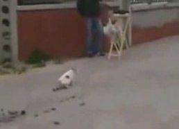 Katino nusivylimas nepagavus balandžio