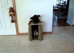 Šuns valgymo kėdė