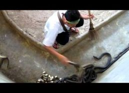 Cleaning the cobra pit