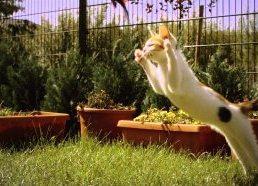 Kitten in Slow Motion