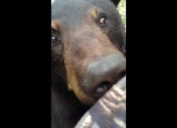 Bear & Man... Face to Face! {ORIGINAL VIDEO}