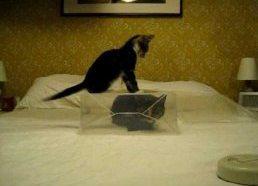 Kačiukas bando patekti į katės plastikinę tvirtovę