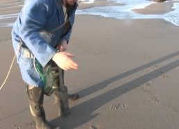 Monster Clams harvesting and hunting