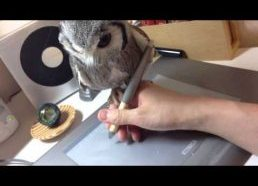 """Owl """"helps"""" owner draw on his tablet"""