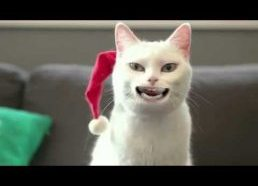 cat singing Jingle Bells