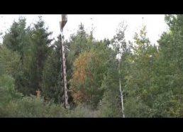 Su sraigtasparniu apipjausto medžius šalia elektros laidų