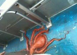 Smartest octopus escapes closed jar