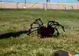 The World's Most Giant Killer Spider!!