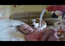 Best Dog ever helps mother change baby's diaper.
