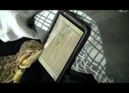 Egzotiniškas driežas dar žinomas kaip barzdotasis drakonas žaidžia Ant Crusher žaidimuką su Android