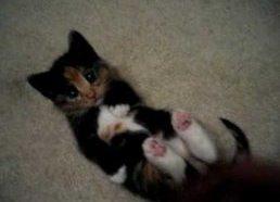 Turbut mieliasuias kačiukas pasaulyje