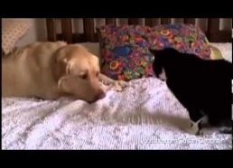 Dogs Annoying Cats with Their Friendship - dogs and cats friedship